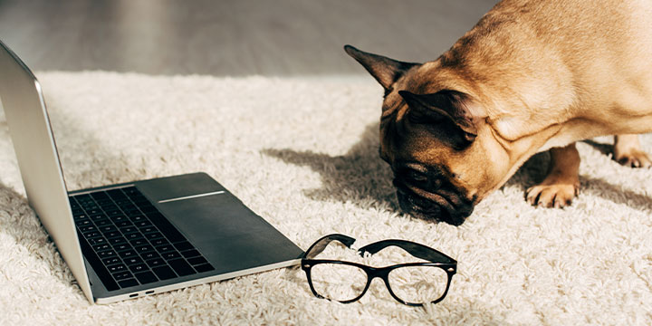 Puppy and Laptop Image